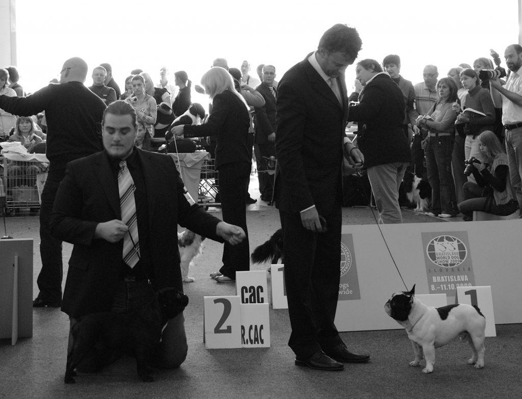 Due persone con due bouledogue durante un esposizione canina